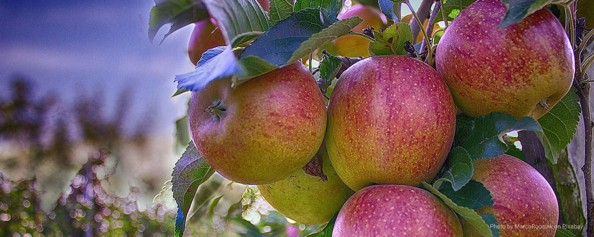 """""""Wherefore by their fruits you shall know them"""" – Christ Jesus (Matthew 7:20)"""